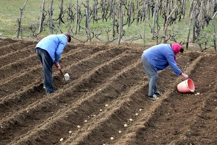 Jačanje poljoprivrede: Ambiciozan projekt: Zeleno svjetlo izgradnji sustava navodnjavanja polja Dubašnica