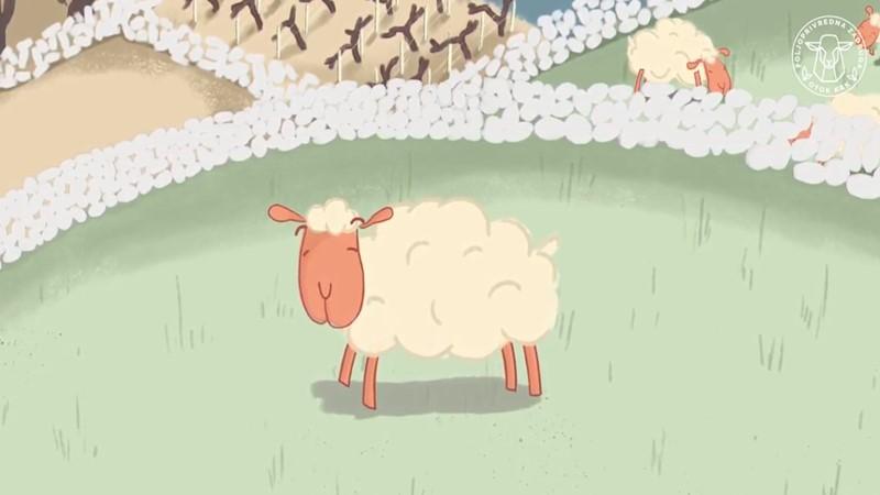 Prikupljanje i plasman ovčje vune